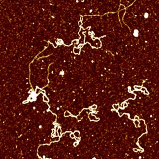 Plasmid DNA in Liquid
